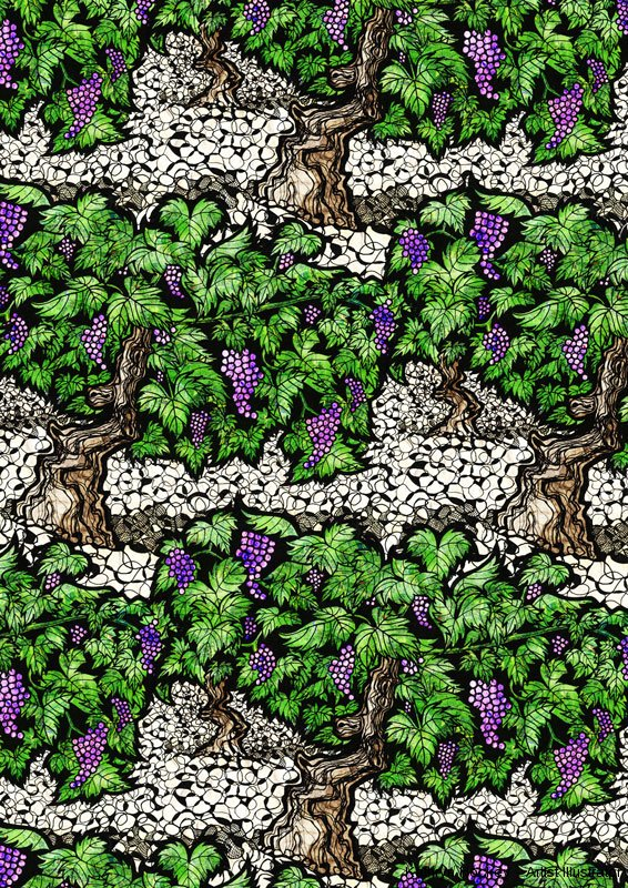 grapevines-kathryn-hockey-artist-illustrator-web