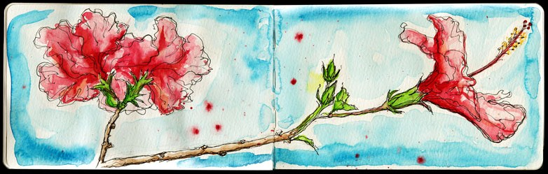 Pink-Hibiscus-kathryn-hockey-artist-illustrator-web