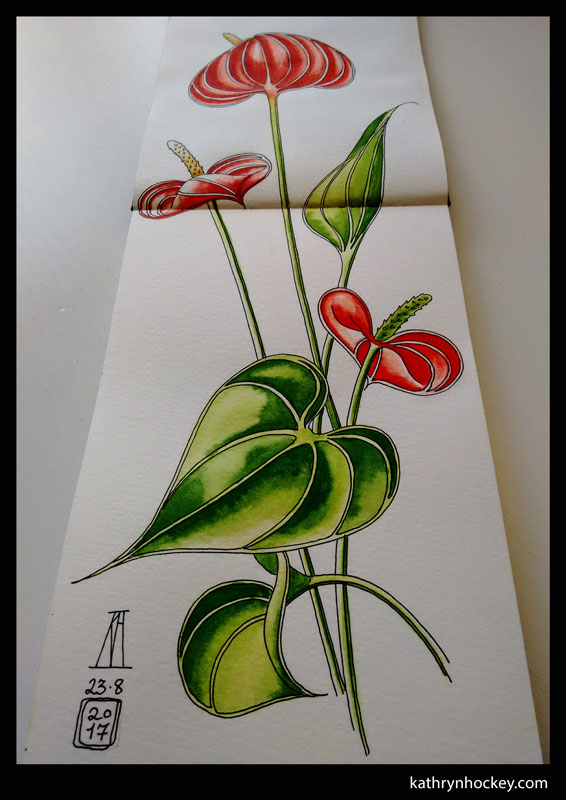 anthurium-1-kathryn-hockey-artist-illustrator-web