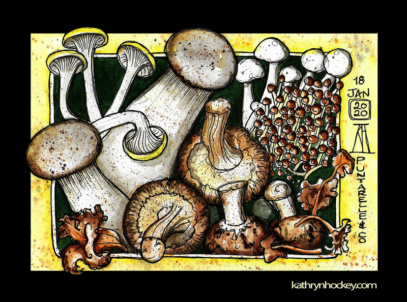 mushrooms-crop2-kathryn-hockey-artist-illustrator