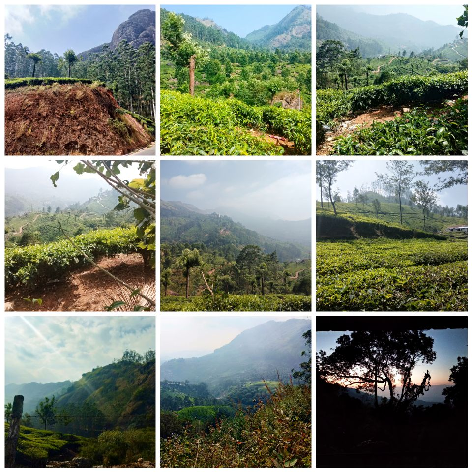 Munnar, Kerala, hill station, tea plantation, tea bush, travel blog, India, mountain