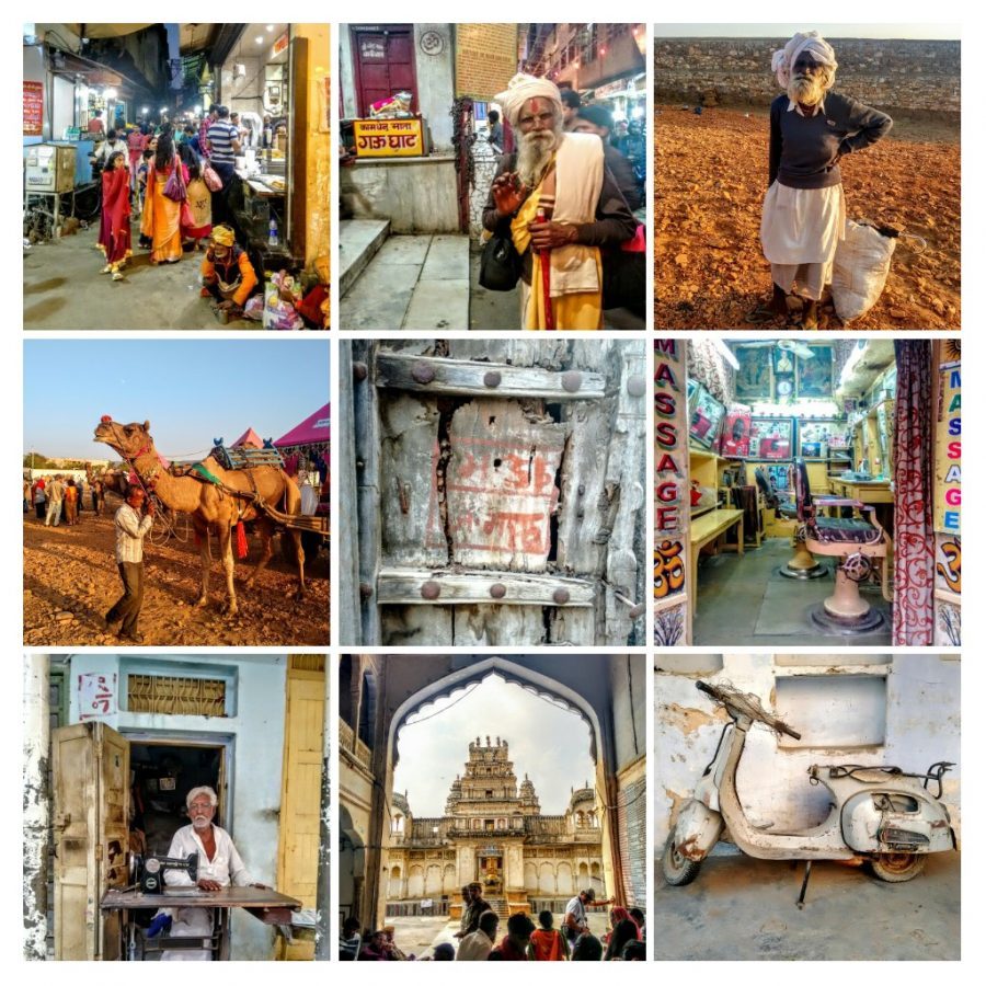 pushkar, India, camel, temple, travel blog