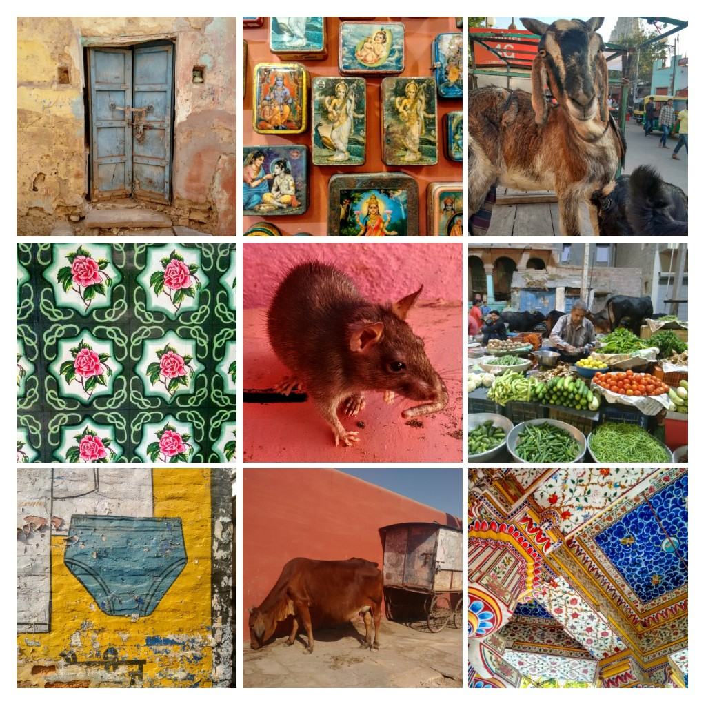 bikaner, karni mata, rat temple, rat, rajasthan, india, travel blog, signwriting, wall painting, market, antiques, tins, cow, goat, jain temple, door, decorative painting