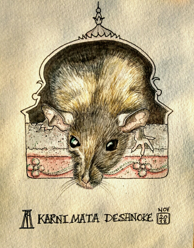 rat, rat temple, temple, deshnoke, rajasthan, karni mata, rodent, hindu, pen, watercolour, watercolor, study, drawing, painting, travel blog, travel illustration, illustration, rodent, art