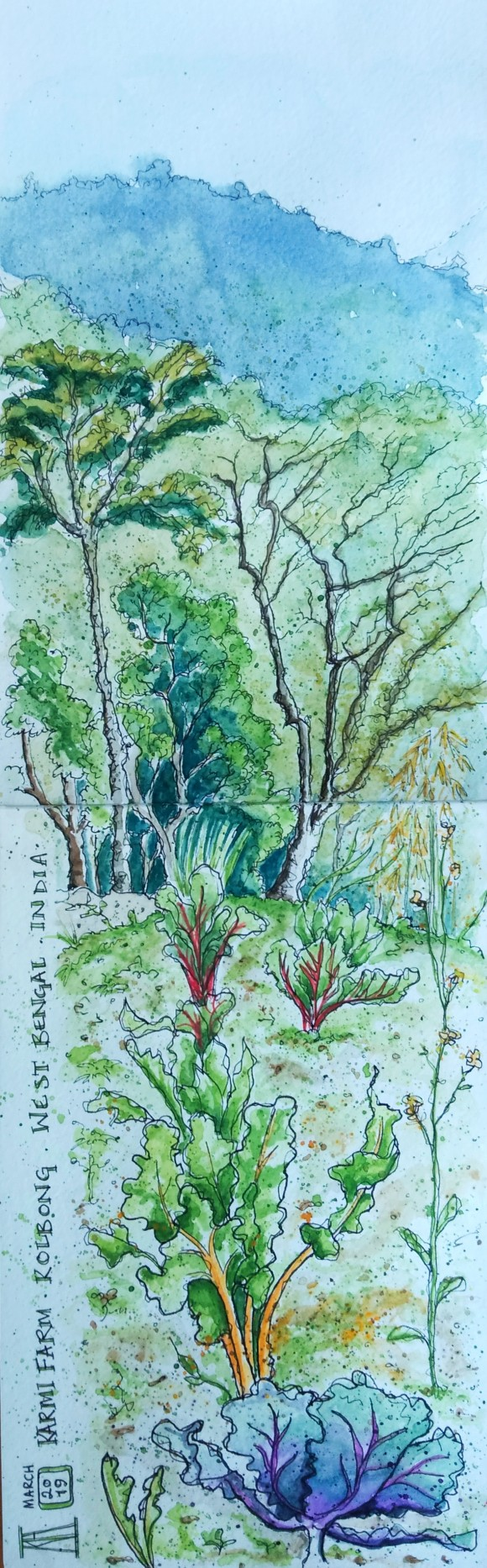 karmi farm, farmstay, west bengal, india, organic farm, travel blog, travel illustration watercolour, watercolor, painting, drawing, sketchbook, travel illustration, vegetables, cabbage patch, himalayan foothills, landscape, trees, mountains, mountain view, kolbong, sikkim, farmstay