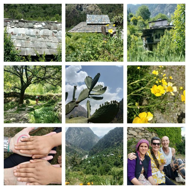 tirthan valley, himachal pradesh, himalayan foothills, kullu, india, springtime, countryside, flowers, mountains, cactus, slate roof