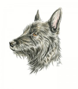 dog, pet portrait, pen drawing, watercolour paint, pen and wash