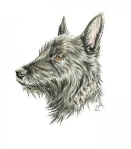 dog, pet portrait, pen drawing, watercolour paint, pen and wash