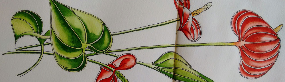 red, anthurium, plant, flower, pen and watercolour, watercolour, water color, acuarela, sketch, illustration