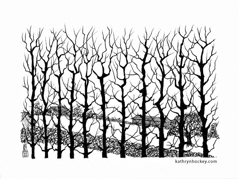 hybrid black poplar, trees, poplar, winter, essex, countryside, silhouette, drawing, sketchbook, landscape, illustration, black and white