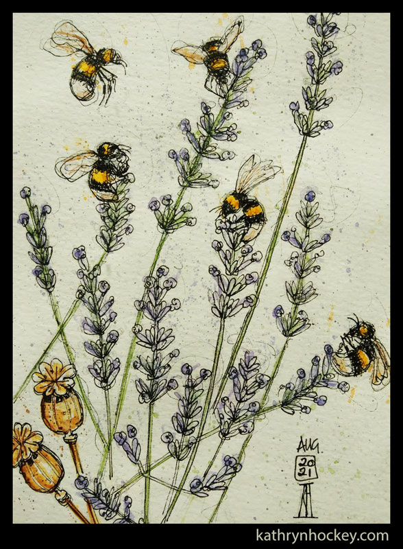 bees, bumble bee, lavender, flowers, poppy, seed heads, insects, pollinators, pen and wash, watercolour, painting, drawing, sketch, sketching, sketchbook, illustration