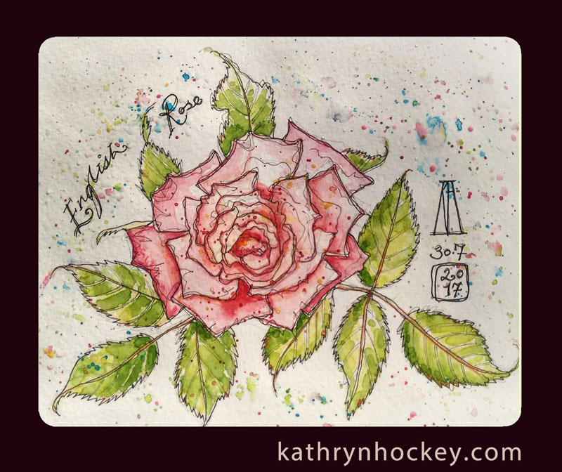english, rose, flower, pen and watercolour, watercolour, water color, acuarela, sketch, illustration