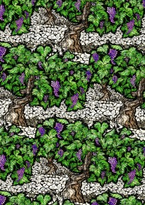 grapevine, vinyard, grapevines, digital collage, illustration