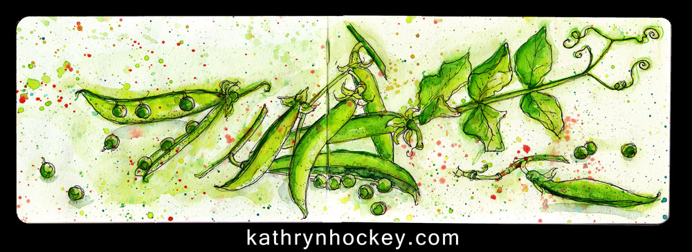 vegetable, food, drawing, water colour, sketch, pen and watercolour, peas, peas in a pod, springtime, green