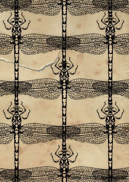 dragonflies-kathryn-hockey-artist-illustrator-a4a-web