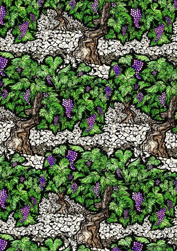 grapevines-kathryn-hockey-artist-illustrator-web