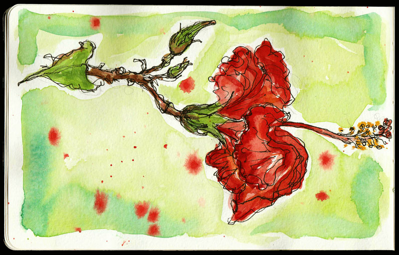 Hibiscus-kathryn-hockey-artist-illustrator-web