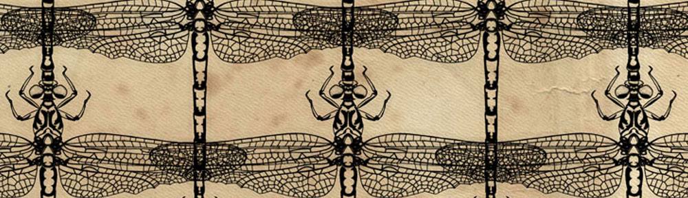 Dragonfly, dragonflies, digital collage, illustration, pen drawing